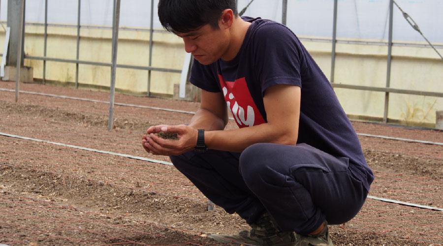 植物に大事な太陽の光と肥えた土壌